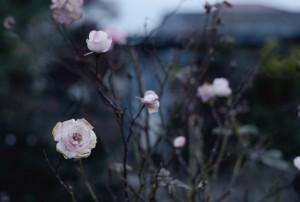 photo:Takumi Kawaguchi photograph works ご案内